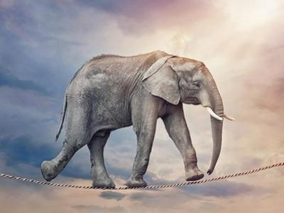 Elephant On A Tightrope by egal