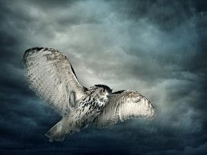 Flying Owl Bird at Night by egal