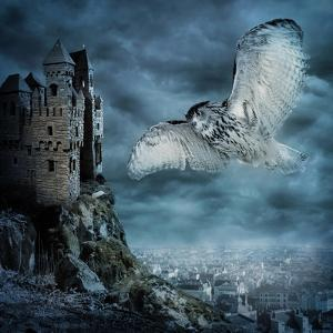Flying Owl Bird by egal