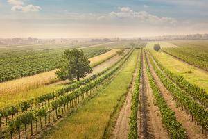 Vineyards Landscape in Burgenland, Austria by egal