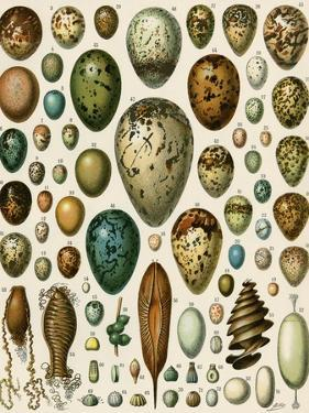 Eggs of Some Birds and Turtles, and Seed Cases of Bryophites and Some Other Plants