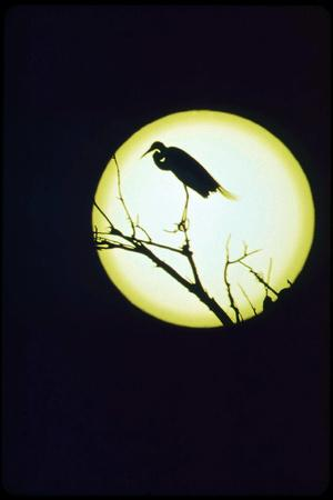 https://imgc.allpostersimages.com/img/posters/egret-silhouette_u-L-Q10PCPF0.jpg?p=0