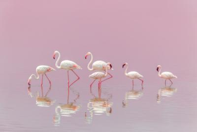Flamingos by Eiji Itoyama