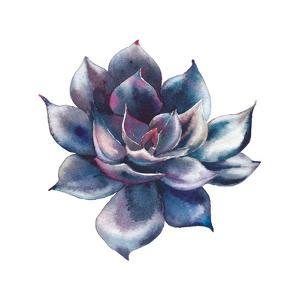 Watercolor Black Succulent by Eisfrei