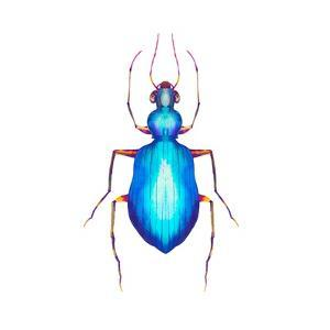 Watercolor Blue Beetle Illustration by Eisfrei