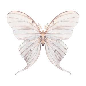 Watercolor Butterfly by Eisfrei