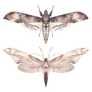Watercolor Moth Set by Eisfrei