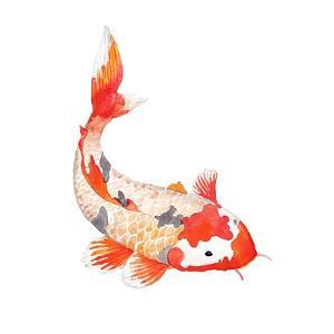 Watercolor Rainbow Carp. Hand Drawn Natural Fish Isolated on White Background. Vector Oriental Wild by Eisfrei
