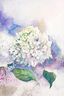 Watercolor White Hydrangea by Eisfrei