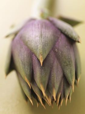 An Artichoke by Eising Studio - Food Photo and Video