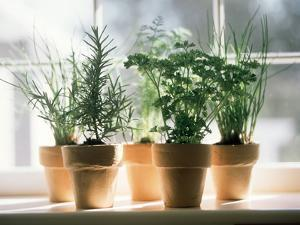 Assorted Herbs Growing in Clay Pots; Window Sill by Eising Studio - Food Photo and Video
