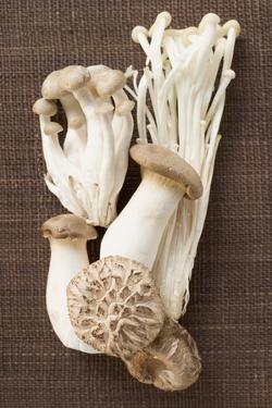 Assorted Mushrooms on Brown Fabric by Eising Studio - Food Photo and Video