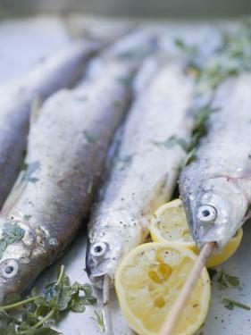 Trout with Lemon Halves and Herbs Ready for Grilling by Eising Studio - Food Photo and Video