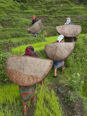 Female Farmers in Field with Traditional Rain Protection, Lwang Village, Annapurna Area, by Eitan Simanor