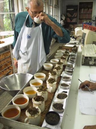 Ravi Kidwai, Tea Specialist, Tasting and Assessing Tea, Kolkata by Eitan Simanor