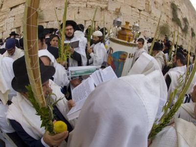 Sukot Festival, Jews in Prayer Shawls Holding Lulav and Etrog, Praying by the Western Wall, Israel by Eitan Simanor