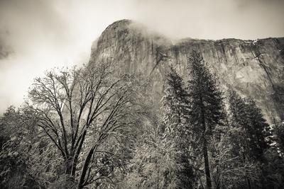 https://imgc.allpostersimages.com/img/posters/el-capitan-and-black-oak-in-winter-yosemite-national-park-california-usa_u-L-Q1D0LXV0.jpg?p=0