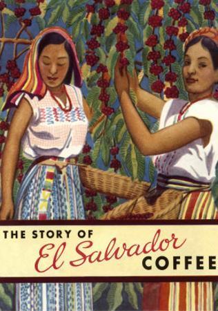 El Salvador Coffee, Pickers