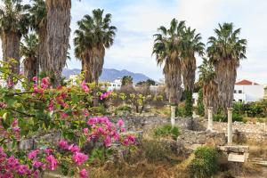 Ancient Agora, Bougainvillea and palm trees, Greek, Roman and Byzantine ruins, Kos Town, Kos, Dodec by Eleanor Scriven