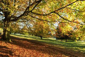 Autumn (fall) colours, Chatsworth Park, stately home of the Duke of Devonshire, Chesterfield, Derby by Eleanor Scriven