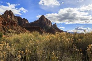 Desert Brush and the Watchman in Winter, Zion Canyon, Zion National Park, Utah, Usa by Eleanor Scriven