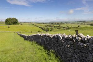 Dry Stone Wall, Farmers' Fields and a Copse of Trees, Limestone Way by Eleanor Scriven