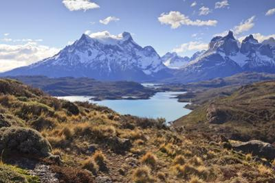 Grasses, Lago Pehoe and the Cordillera Del Paine, Torres Del Paine National Park by Eleanor Scriven