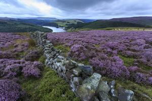 Heather Covered Bamford Moor by Eleanor Scriven