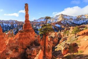Large Hoodoo Lit by Early Morning Sun, with Snow and Pine Trees, Peekaboo Loop Trail by Eleanor Scriven