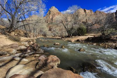 Shores of the Virgin River and Winter Trees, Pa'Rus Trail, Zion National Park, Utah, Usa