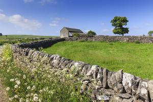 Typical Spring Landscape of Country Lane, Dry Stone Walls, Tree and Barn, May, Litton by Eleanor Scriven