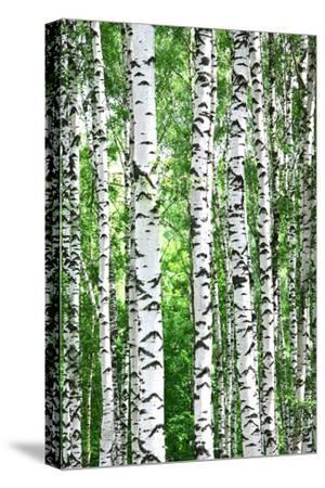 Birches by Elena Kovaleva