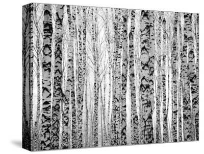 Winter Trunks Birch Trees by Elena Kovaleva