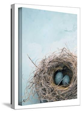 Blue Nest Gallery-Wrapped Canvas by Elena Ray