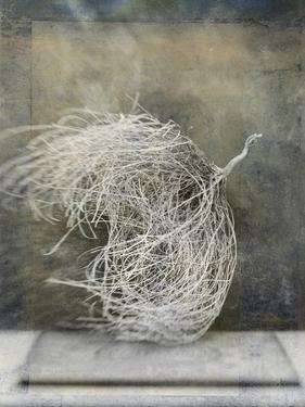 Desert Form I by Elena Ray