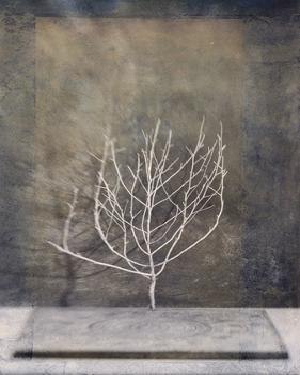 Desert Form II by Elena Ray