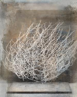 Desert Form V by Elena Ray
