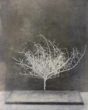 Desert Form VI by Elena Ray