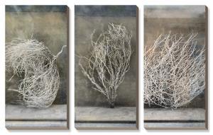 Desert Form by Elena Ray