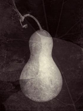 Gourd I by Elena Ray