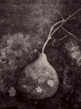 Gourd IV by Elena Ray