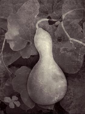Gourd V by Elena Ray