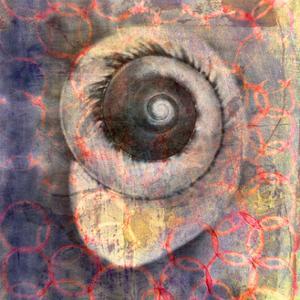Seashell-Snail by Elena Ray