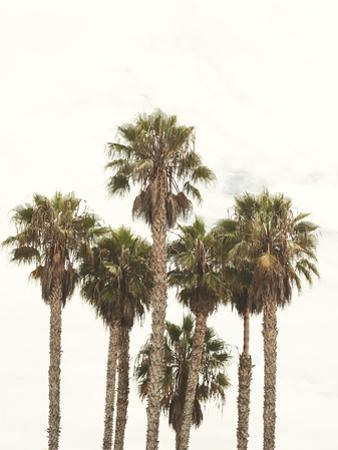 Amazing Palm Tree in Beverly Hills, California - USA by elenaburn