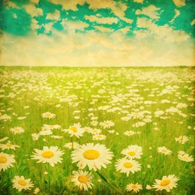 Vintage Photo of Daisy Field and Cloudy Sky by Elenamiv