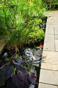 Lush Green Garden with Stone Landscaping and Koi Pond by elenathewise