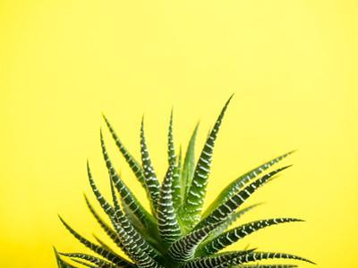 Green Cactus on a Fashionable Yellow Colored Background by Elenglush