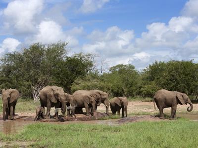 https://imgc.allpostersimages.com/img/posters/elephant-herd-kruger-national-park-south-africa-africa_u-L-PFNOGK0.jpg?p=0
