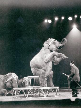 https://imgc.allpostersimages.com/img/posters/elephant-performing-in-a-circus_u-L-P56U810.jpg?p=0