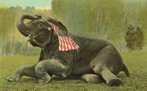 Elephant with Flag